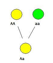 Mendel 1